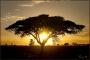 africa-001.jpg